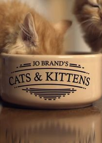 Picture Jo Brand's Cats and Kittens Episode 2
