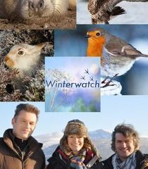 Picture Winterwatch Episode 3