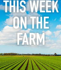 Picture This Week on the Farm Episode 4