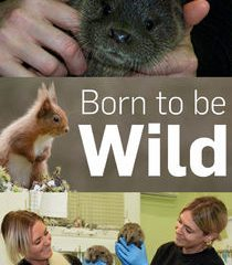 Picture Born to Be Wild Episode 3