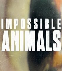 Picture Impossible Animals Coasts